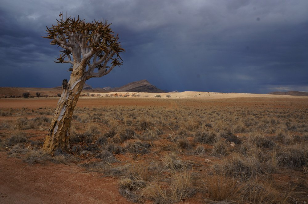 Strong rain clouds clouding Namibia sunset storm