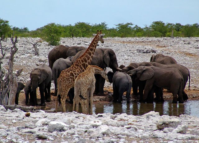 This is what happens when all the animals are forced to drink from the same pond! (I didn't see this)