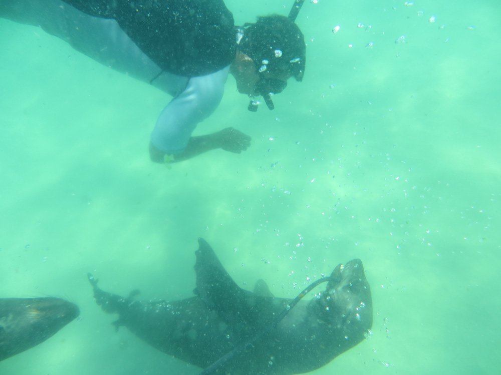 Getting close and personal to a seal!