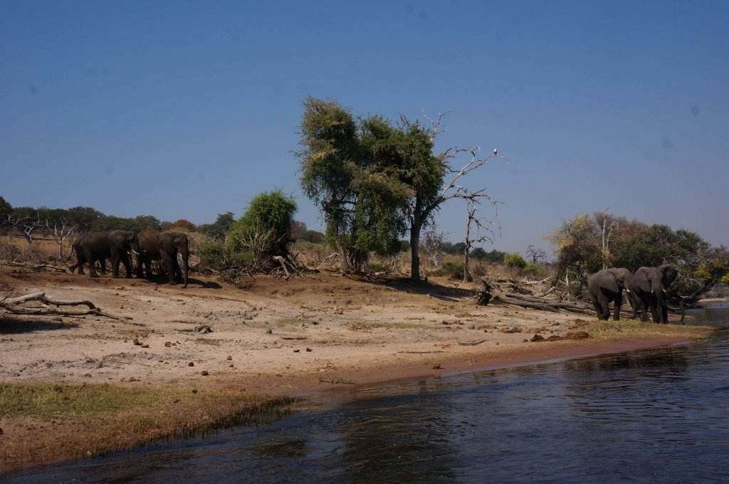 The guide knows his stuff. The elephants shortly thereafter came down towards the water for a drink.