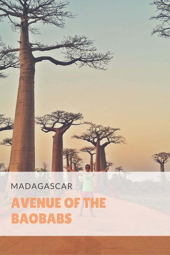 Guide to Visiting Morondava and Avenue Of The Baobabs