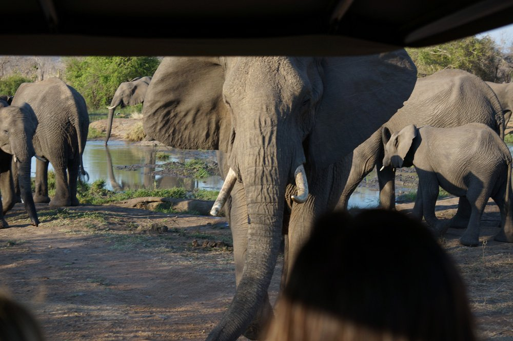 This elephant didn't like us getting so close and warned us accordingly.
