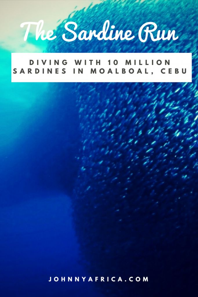 Diving With 10 Million Sardines In Moalboal, Cebu