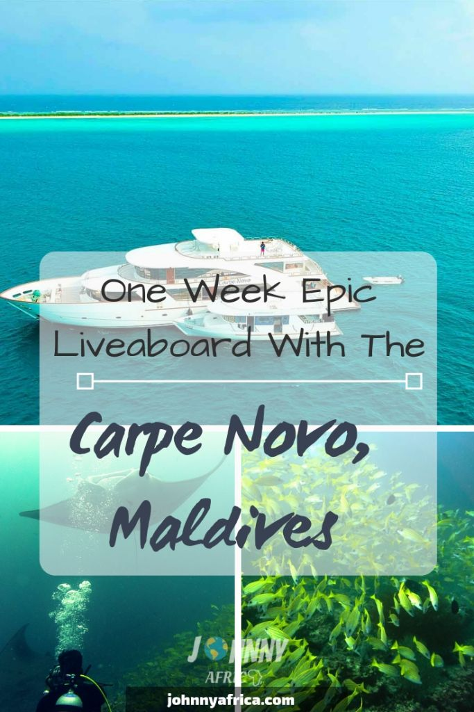 An Amazing Week Diving In the Maldives With Carpe Diem Liveaboards