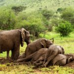 Top-Rated Tourist Attractions in Tanzania